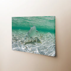 Bonefish Canvas