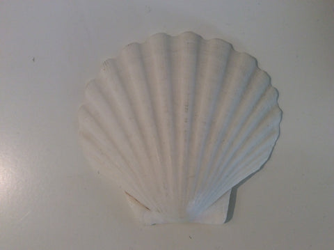 Smudge - Scallop Shell - Small White