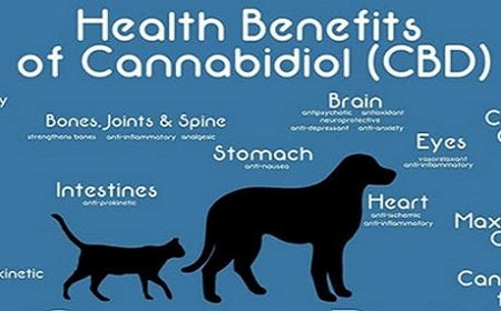 CBD Oil is Catching the Attention of Veterinarians