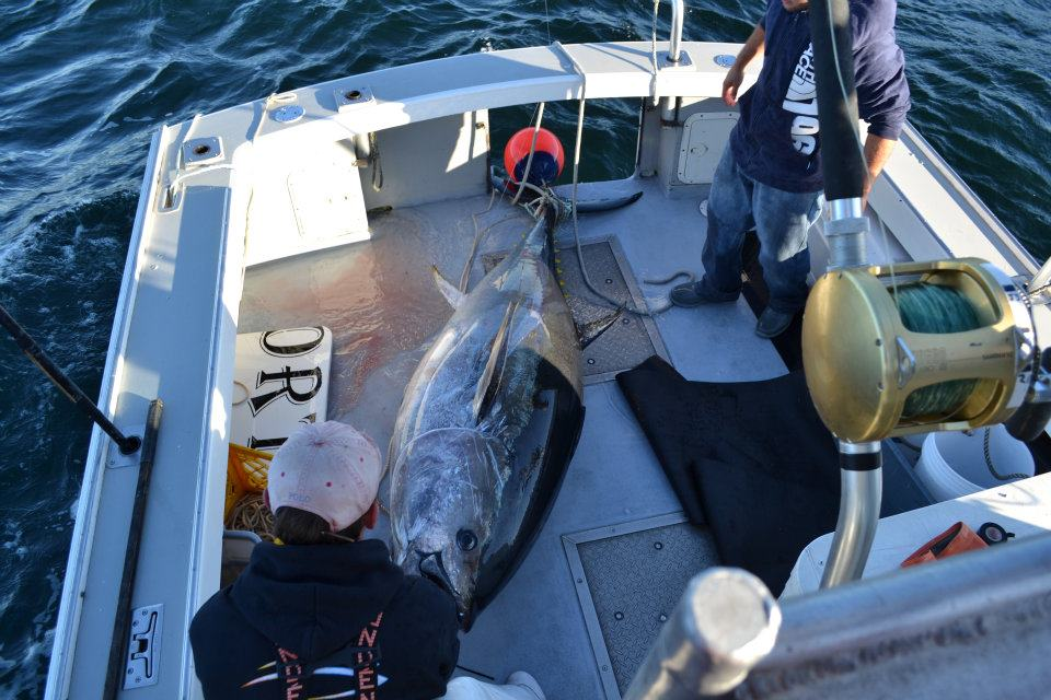 Giant bluefin ETG Fishing