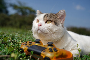 Gaming, fitness, pets fast-growing businesses: firm