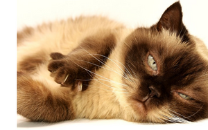 6 Signs that your cat is stressed the heck out