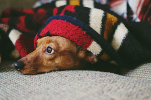 Why the Holidays Can Actually be a Good Time to Adopt a Pet