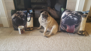 Pet Stop Store's Mug Shot Giveaway WINNER Amanda Eagan Shares her PRIZES