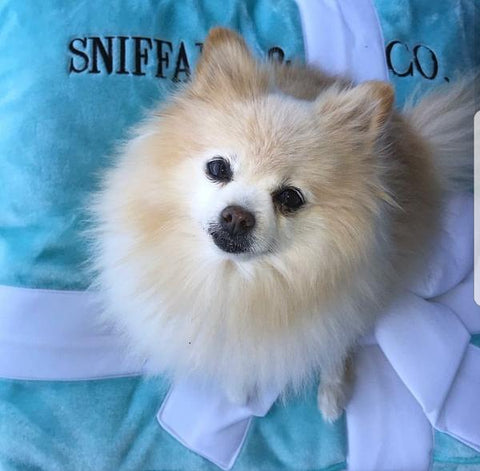@SparklesisFancy on Instagram loves her Sniffany Bed sold at Pet Stop Store