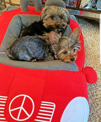 Red Mercedes Benz Dog Bed at Pet Stop Store