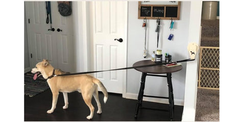 No Crate Needed with Easy Hook dog hooks at Pet Stop Store