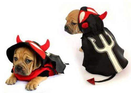 Halloween Red & Black Dirty Devil Costume for Dogs