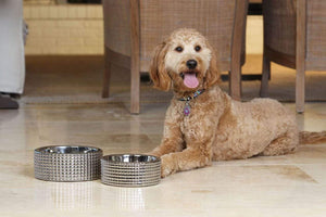Pet Stop Store s canister Stylish & Modern Berlin Nickel Plated Porcelain Dog Bowl Sets