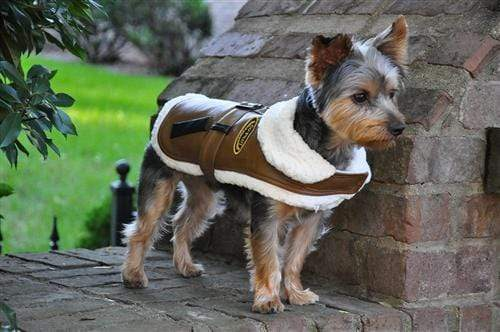 Stylish Brown & Black Trim Vintage Bomber Coat & Leash