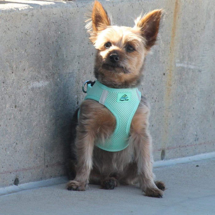 American River Choke Free Teal Green Dog Harness