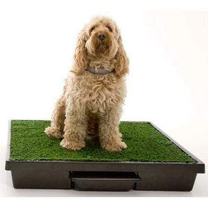 Petsafe Pet Loo Potty Training System - Medium