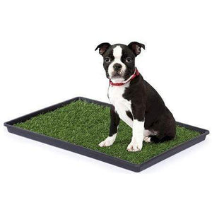 Prevue Hendryx Tinkle Turf - Large