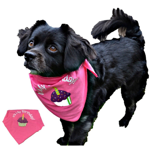 Birthday Bandana for Dog