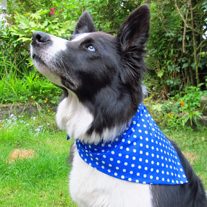 Blue Polka Dot Dog Bandana
