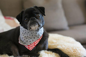 Oatmeal / Grey Reversible Dog Bandana Collar