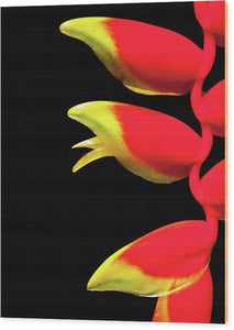 Heliconia Triplet - Wood Print