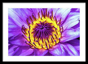 Waterlily - Framed Print