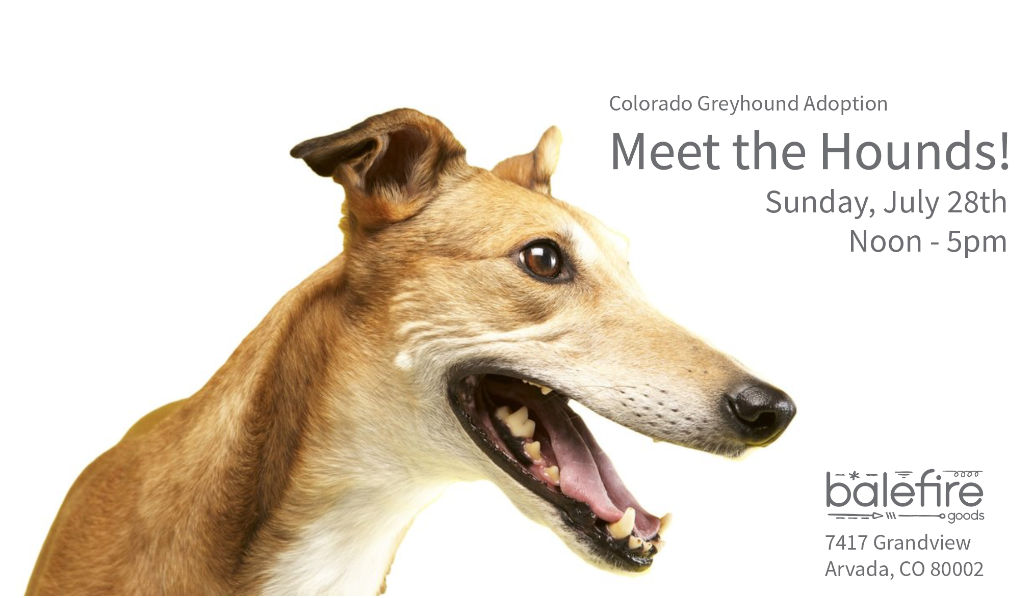 Colorado Greyhound Adoption: Meet the Hounds!