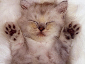 12 Cute Kitten GIF's That Prove Kittens R U L E!!!