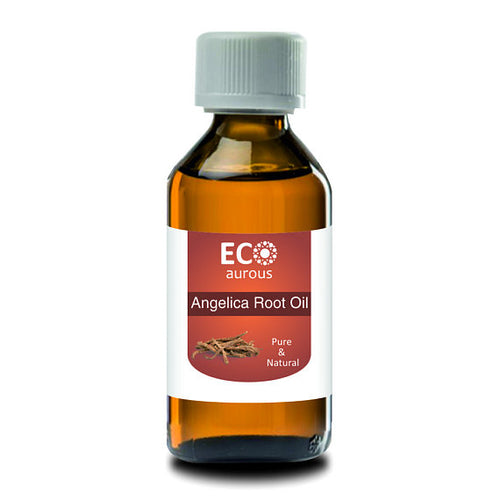Angelica Root Essential Oil | Angelica Root Oil | - The Poacher Online