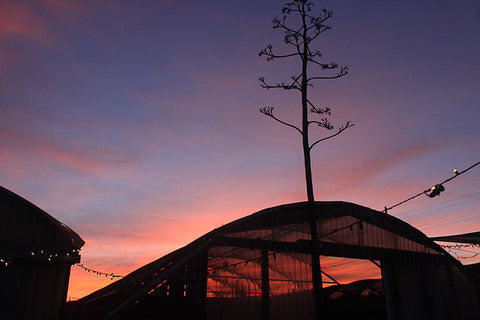 Greenhouse galley with lights at sunset