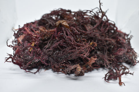 Wholesale Purple Sea Moss | Irish Moss | Wildcrafted