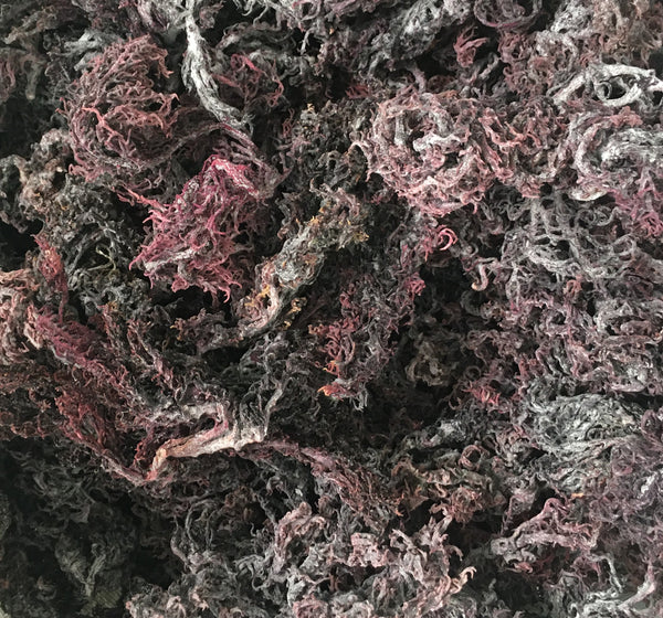 PURPLE SEA MOSS | IRISH MOSS | WILDCRAFTED RAW VEGAN