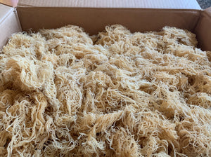 Wholesale Sea Moss | Irish Moss | Wildcrafted | Bulk Sea Moss