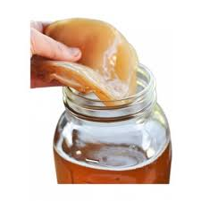 Kombucha Scoby (Starter Culture) 1 serve