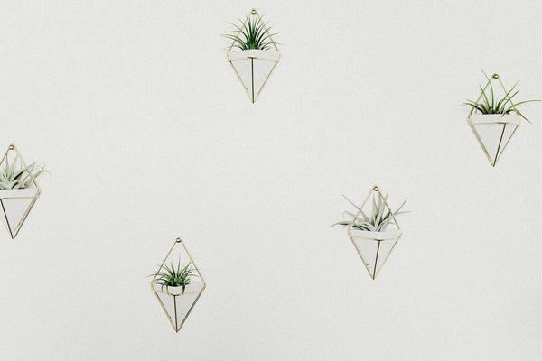 9 Creative Ways to Stylize Your Tillandsias