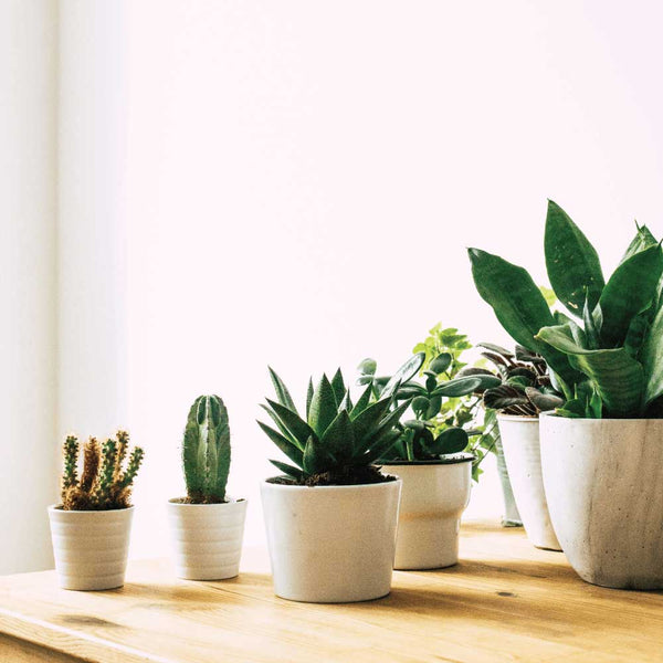 best indoor plants for health benefits