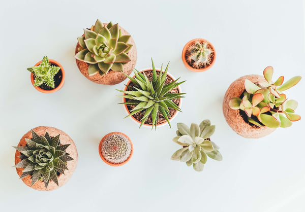 How to Pick the Perfect Planter