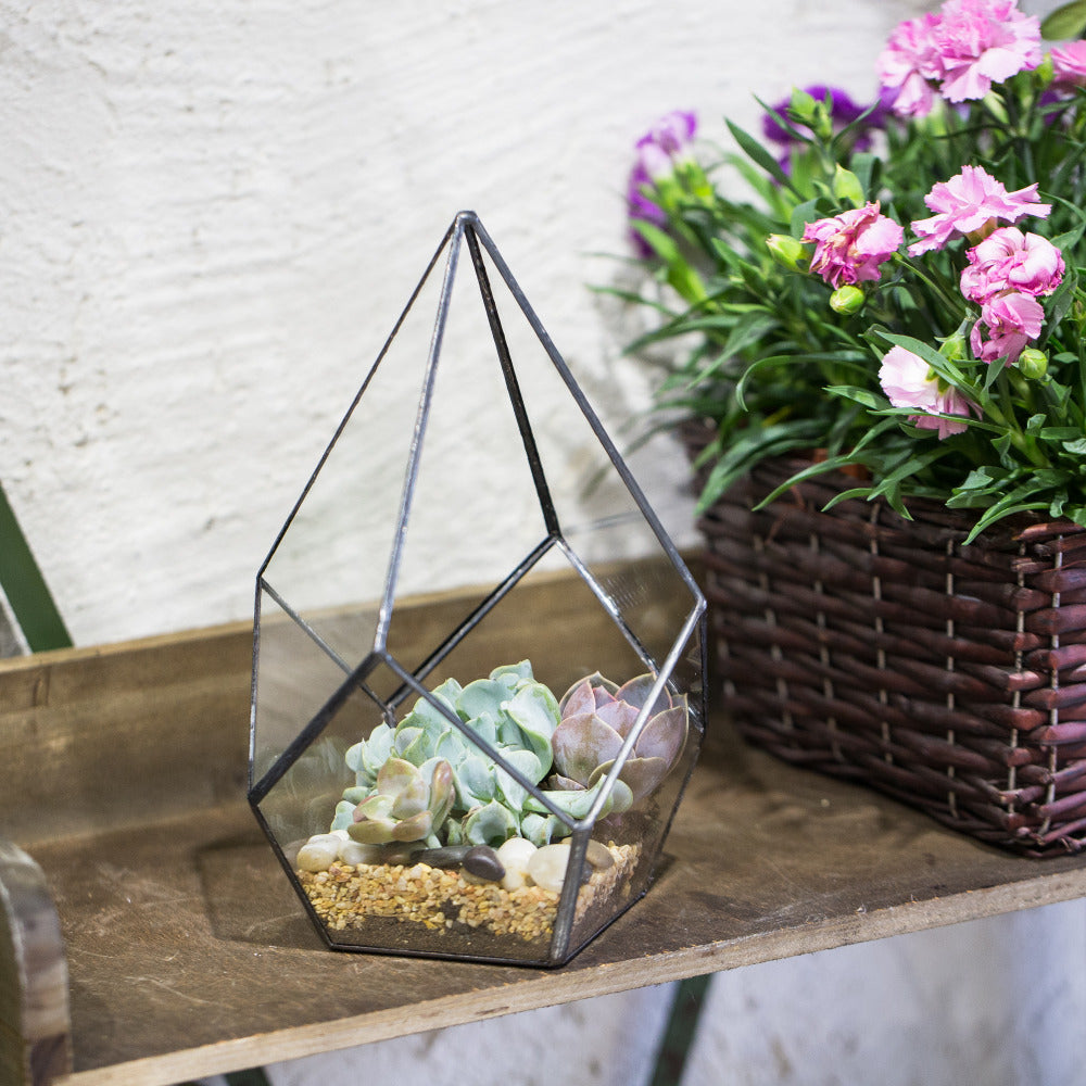diamond terrarium for a modern minimalist home