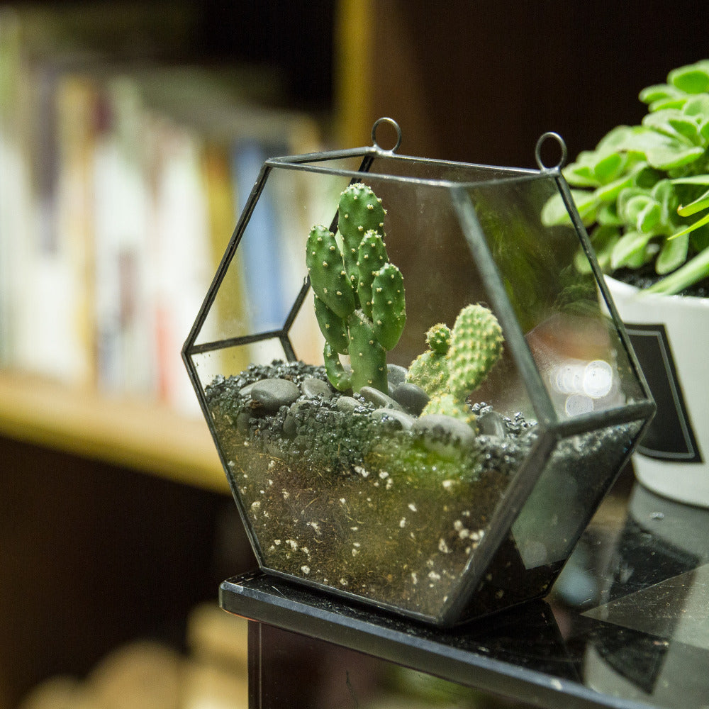hexagon hanging terrarium for a minimalist home