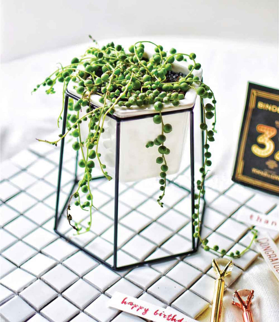 String of pearls hexagon planter black