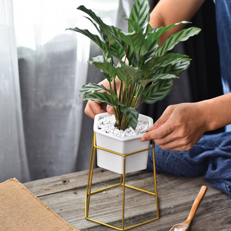 Hexagon Stand & Planter (gold)