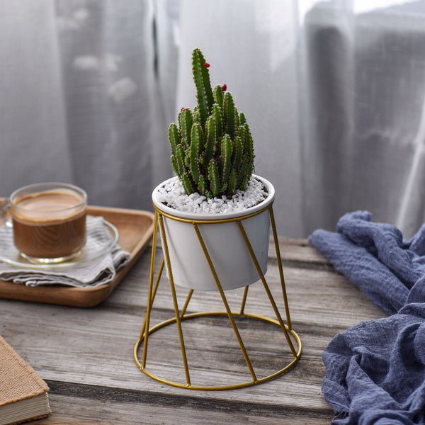 Twist Stand & Planter (Gold)