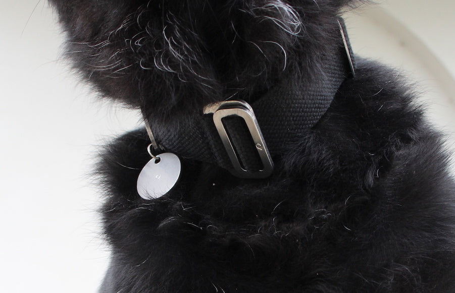 BEST COLLAR FOR A BLACK DOG