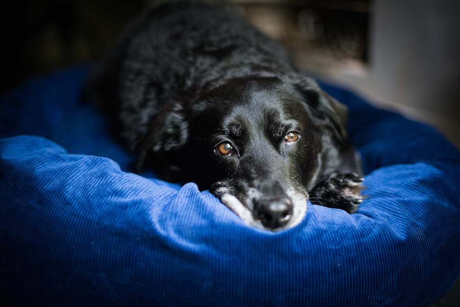 5 THINGS TO CONSIDER WHEN BUYING A DOG BED