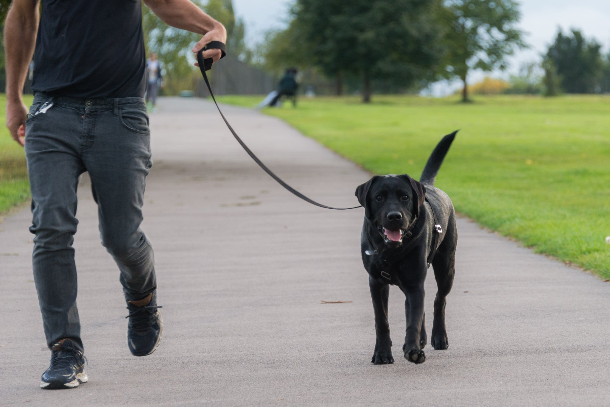 5 THINGS TO CONSIDER WHEN CHOOSING A HARNESS FOR YOUR DOG