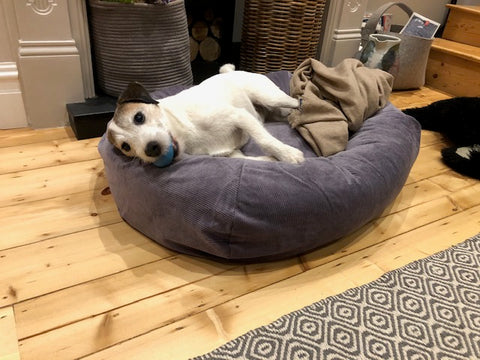 comfy bed for terrier
