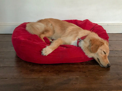 comfy red dog bed