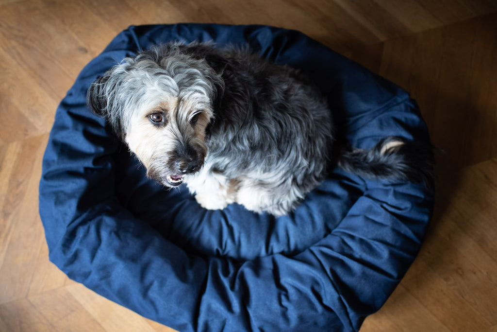denim bed for dog