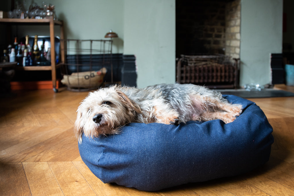 denim bed for small dog