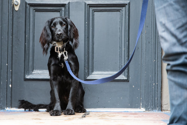 navy blue dog lead