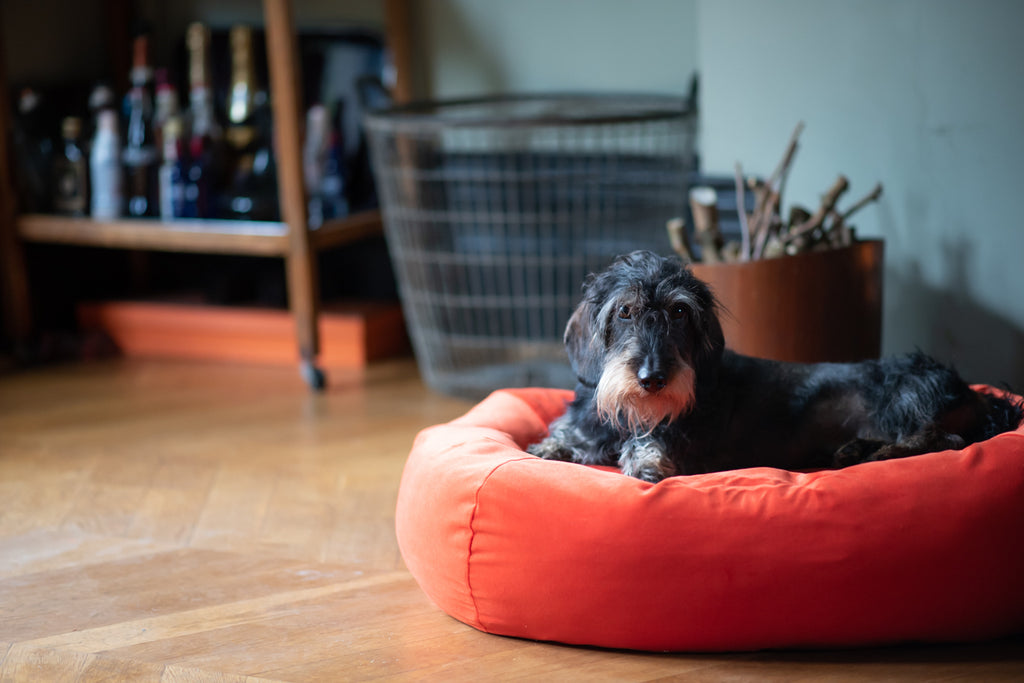 orange bed for small dog
