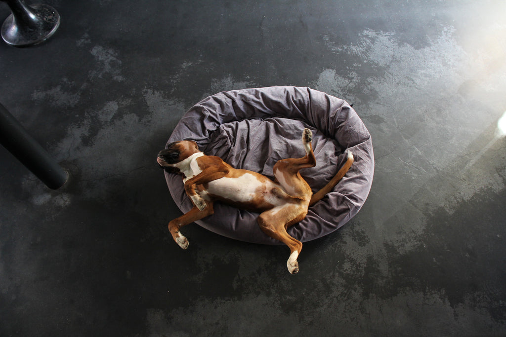 silver cord dog bed