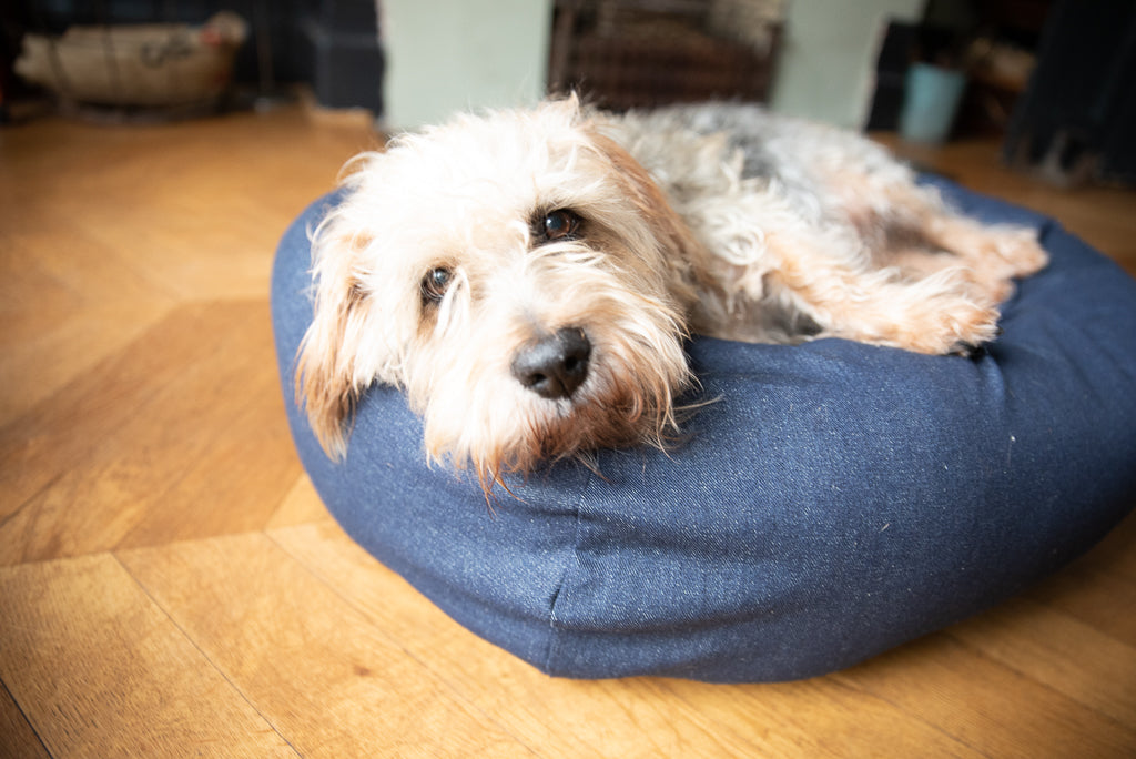 small denim dog bed