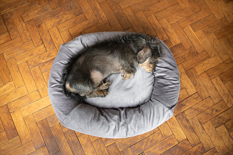 small dog bed for dachshund